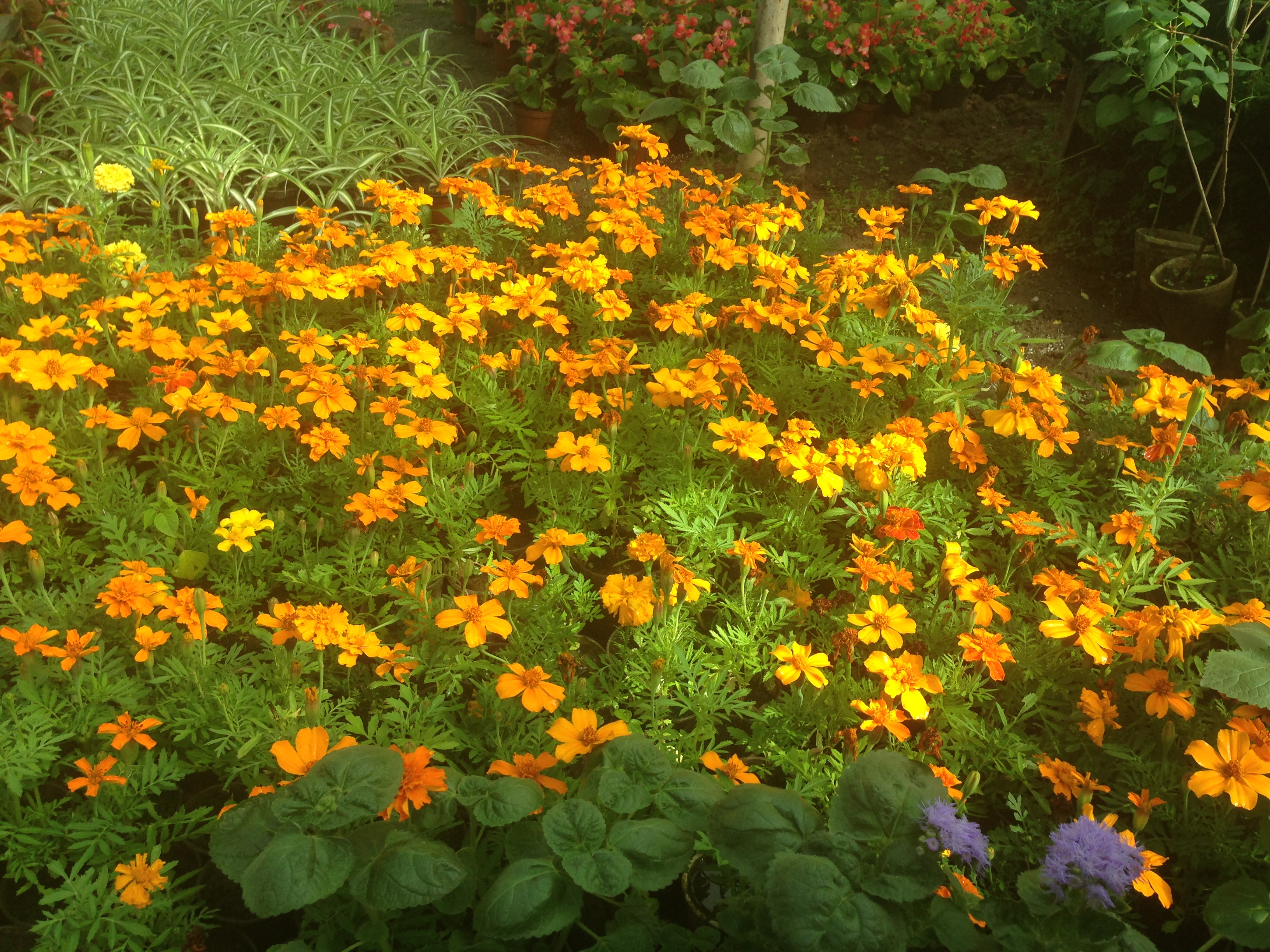 Фото многолетних и однолетних цветов