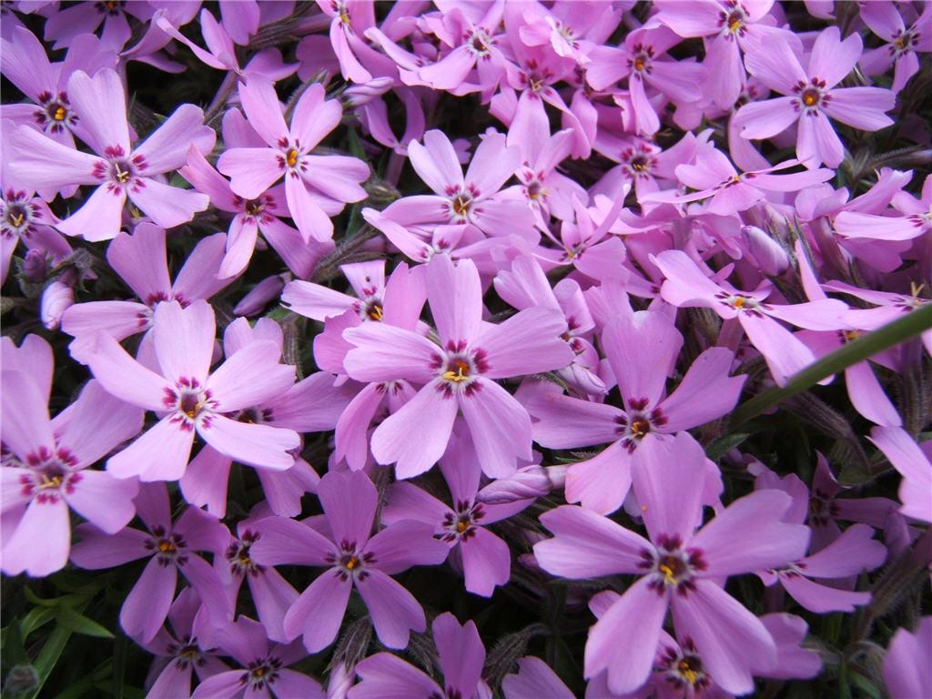 Многолетние и однолетние цветы: zelenhoz.com.ua/?p=601